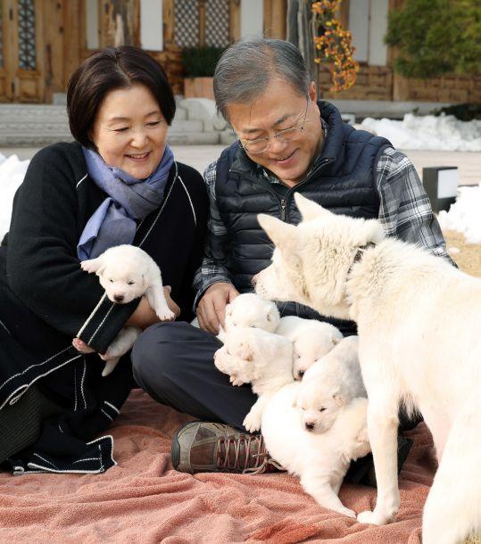"""文在寅展示金正恩赠送的""""和平礼物"""":一群小萌犬"""