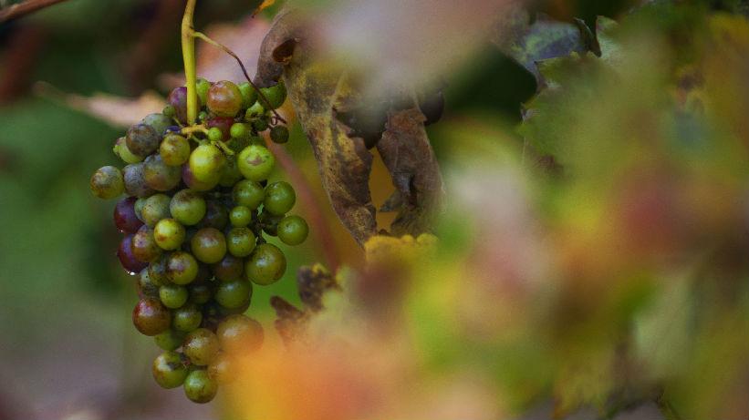 西媒称西班牙葡萄酒商瞄准中国商机:消费者越来越懂鉴赏
