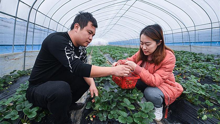 生态农业大棚迎来丰收季