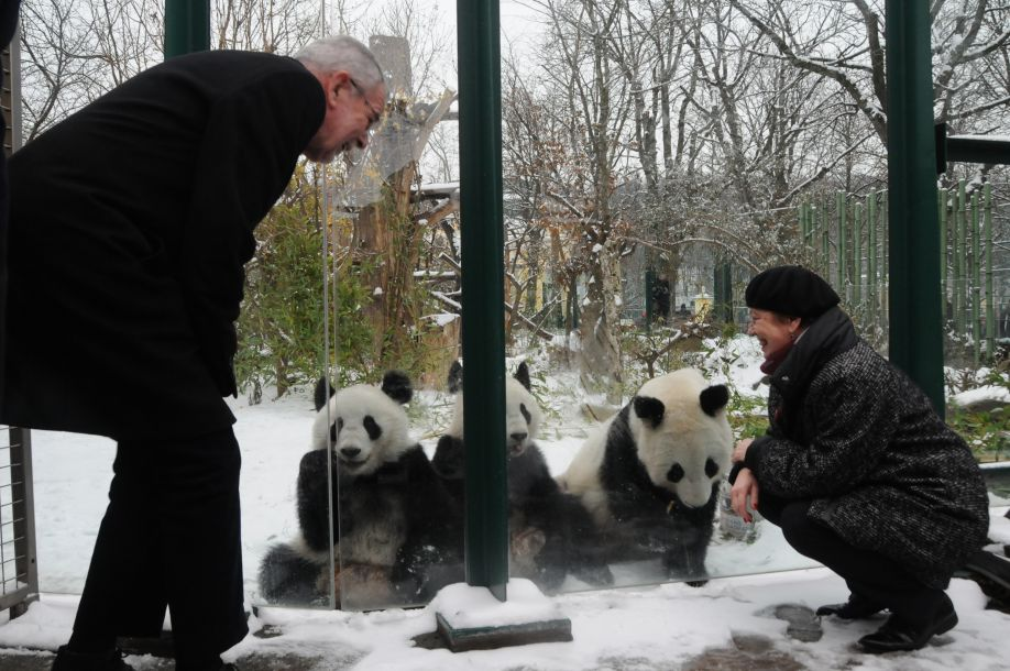 奥地利出生的大熊猫龙凤胎即将返回中国
