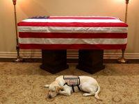 盘点美国总统和他们的爱犬 老布什的服务犬最悲伤