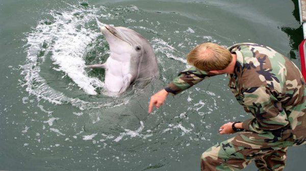 图为美军使用的海豚