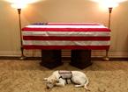盤點美國總統和他們的愛犬 老布什的服務犬最悲傷