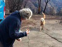 忠犬在加州大火中护家数星期