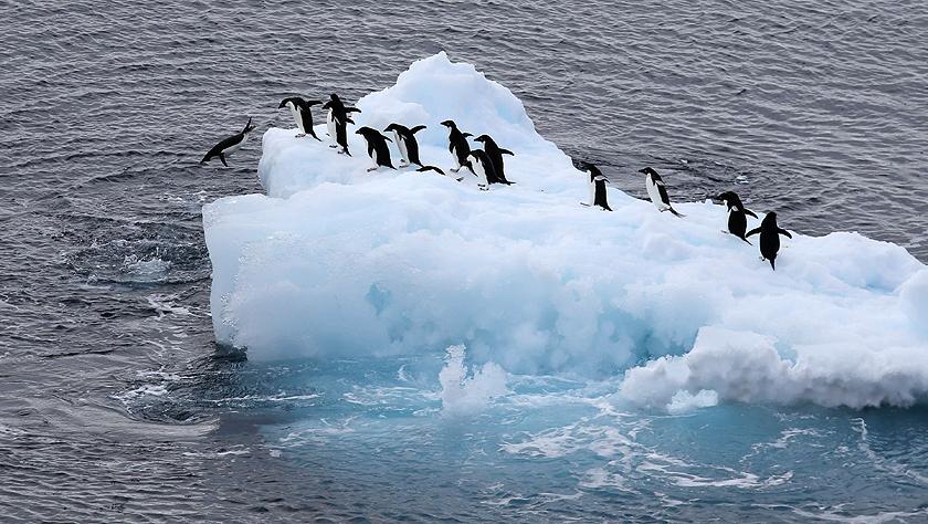 特写:南极西冰架的冰山与动物世界