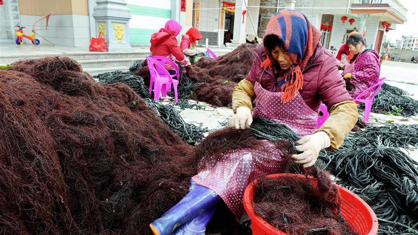 福建南日岛:海水养殖富渔家