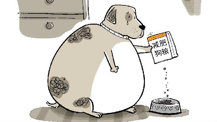 【双语汇】动物肥胖 Animal Obesity