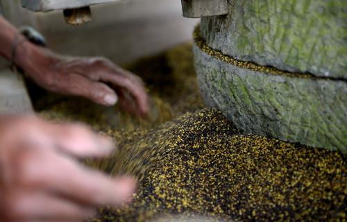 美媒称中国彻底停购加拿大油菜籽 中方回应
