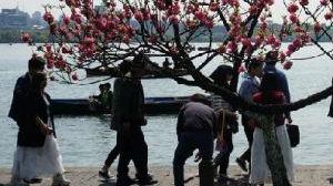 外媒看中国清明节:在盎然春意中祭奠逝者