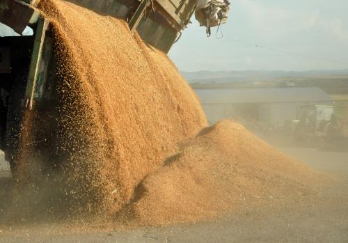 油菜籽入华受挫后,加拿大大豆豌豆出口商也慌了