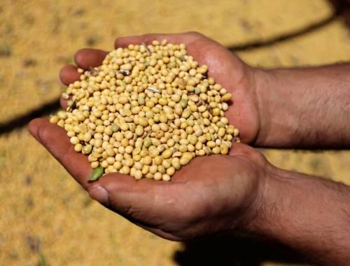关于大豆,美国有了新方案——