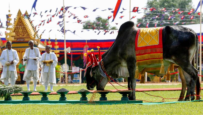柬埔寨庆祝传统御耕节