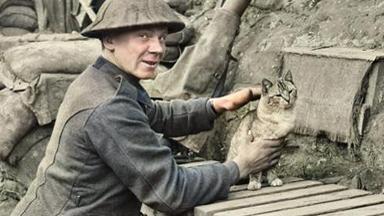 战斗间隙不忘逗猫!百年前一战照片曝光