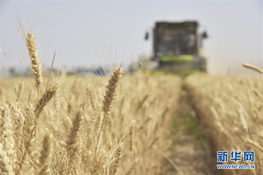 全国夏粮收获已近八成