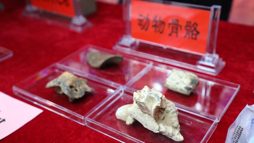 考古证实:甘肃白石崖溶洞是青藏高原目前已知最早考古遗址