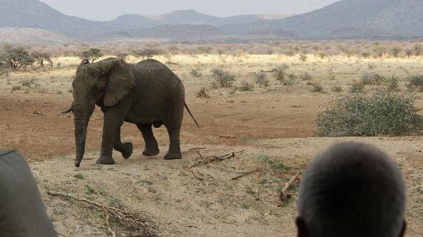 西媒:受严重干旱影响 纳米比亚政府决定拍卖野生动物_德国新闻_德国中文网