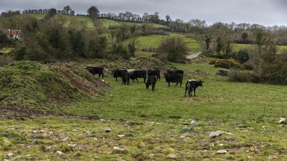 """英媒:中国开放牛肉市场令威尔士""""激动"""""""