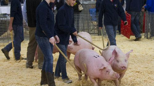 英媒:加拿大肉类养殖户失去中国市场损失巨大