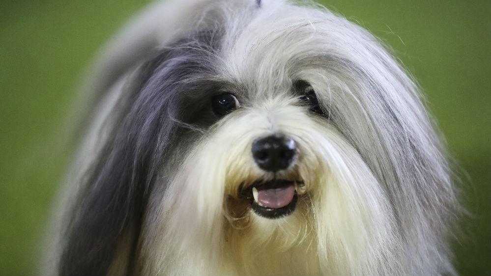 中国初创公司利用鼻纹寻找小狗 已助1.5万只宠物与主人团聚