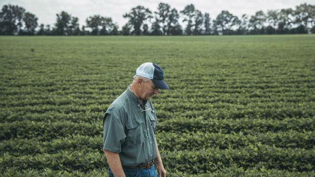 美媒称贸易战令美国棉农压力巨大:如果挺不住就完了