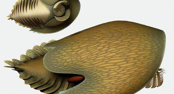 """俄媒:古生物学家在加拿大发现史前形似""""克苏鲁""""遗骸"""