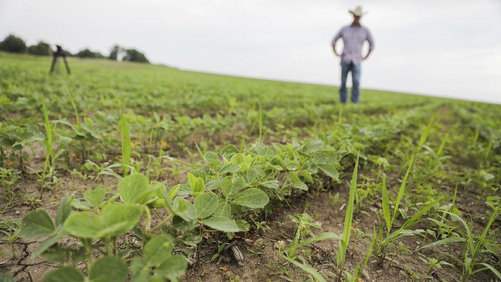 反击美出尔反尔违背共识 中国暂停进口美农产品