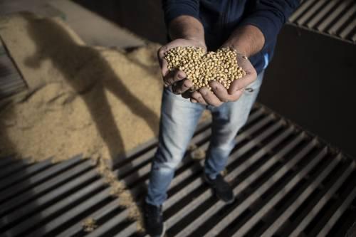 难寻替代中国买家,美国大豆库存将创历史新高……