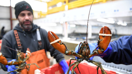 美媒:美对华龙虾出口出现断崖式下降 加拿大生意蒸蒸日上