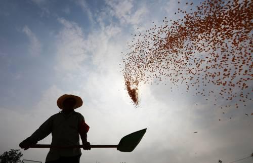 让这国吞下进不了中国的农产品,特朗普的计划或要泡汤……
