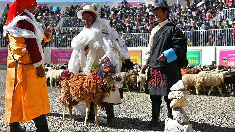 南非专家实地走访见闻:中国扶贫举措令西藏兴旺发展