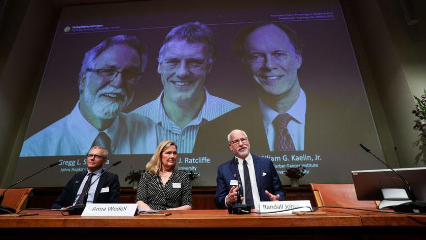 三名迷信家分享2019年诺贝尔生理学或医学奖