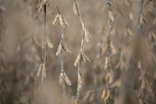 日媒:大豆价格快速上涨,创16个月来新高——