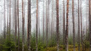 路人在挪威森林采蘑菇 竟发现成吨神秘硬币