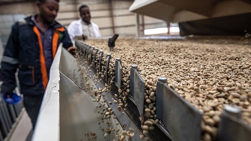 進博會有助于埃塞咖啡開拓中國市場