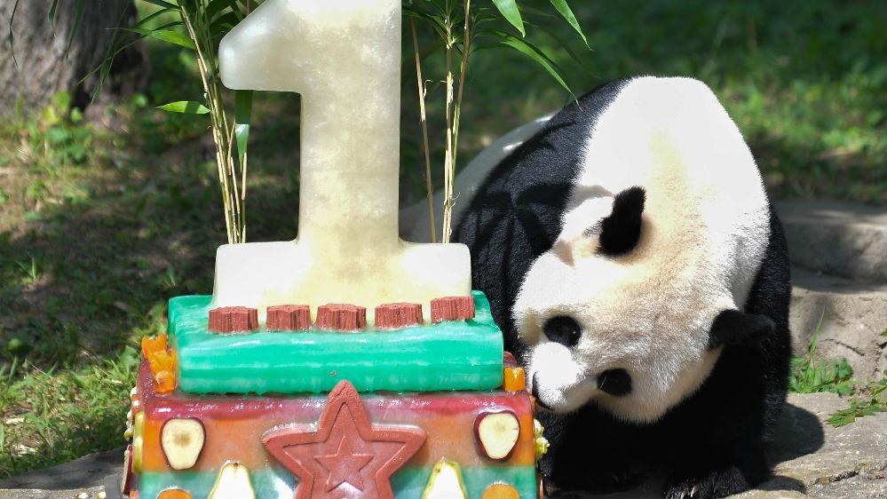 外媒:华盛顿动物园4岁熊猫贝贝启程返回中国