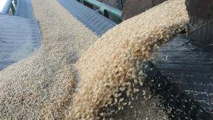 2019年中国粮食总产量创历史新高引外媒关注