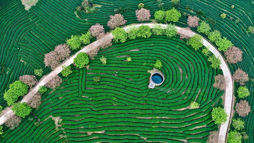 年終報道·2019看中國|鄉村振興,在希望的田野上