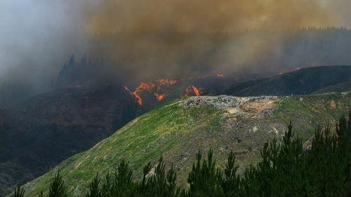 外媒:新西兰北岛突发森林大火 过火面积超300公顷_德国新闻_德国中文网