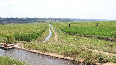 """非洲出现""""盒马村"""":卢旺达辣椒酱成中国年货"""