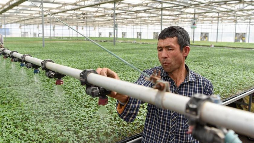 新疆阿克陶:发展设施农业 助力脱贫攻坚
