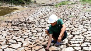 泰国越南遭遇干旱 国际大米价格创六年新高