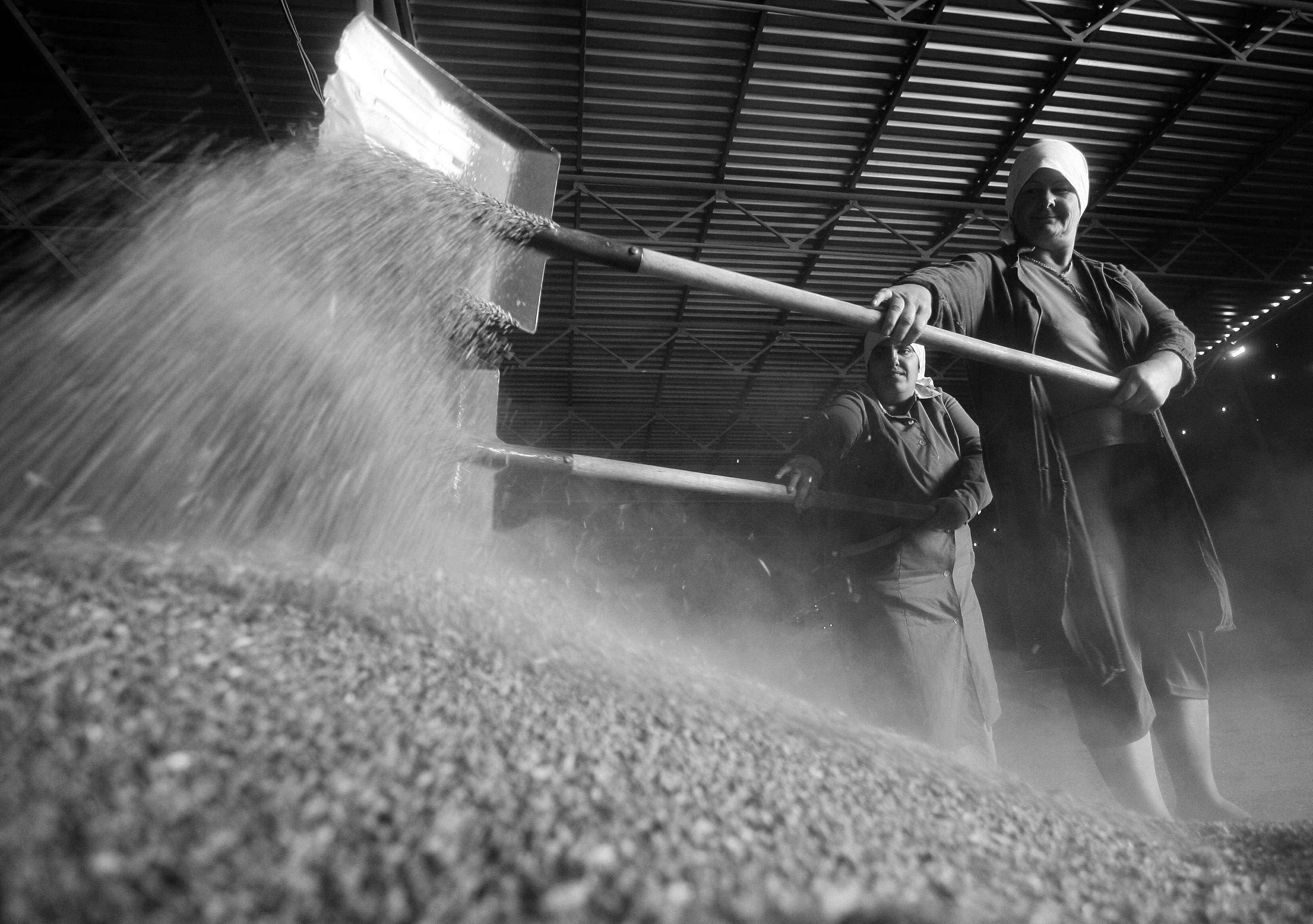 俄罗斯限制疫情期间谷物出口 以维持国内粮价稳定