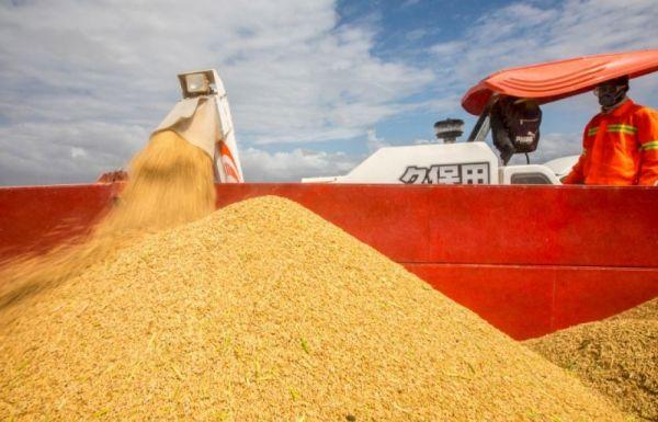 2019年4月7日,在莫桑比克万宝莫桑农业园,刚刚收割的水稻被装入拖拉机,准备运往仓库。新华社记者张宇摄