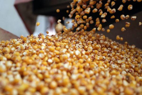 外媒:俄罗斯暂停谷物出口