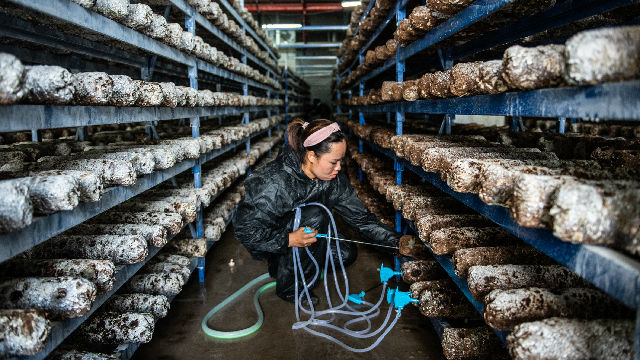 世界看中国脱贫 | 印尼智库亚洲创新研究中心主席苏尔约诺:中国将扶贫工作做到最扎实