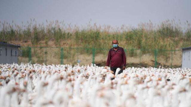 世界看中国脱贫 |阿根廷中国问题专家布斯特洛:中国脱贫成就开创历史先例