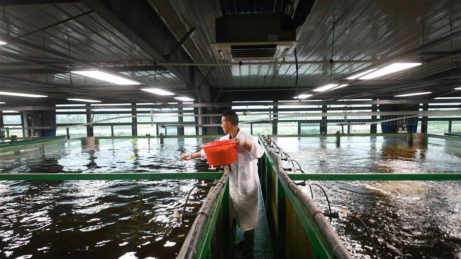 浙江湖州:智能化循环水养殖效益高