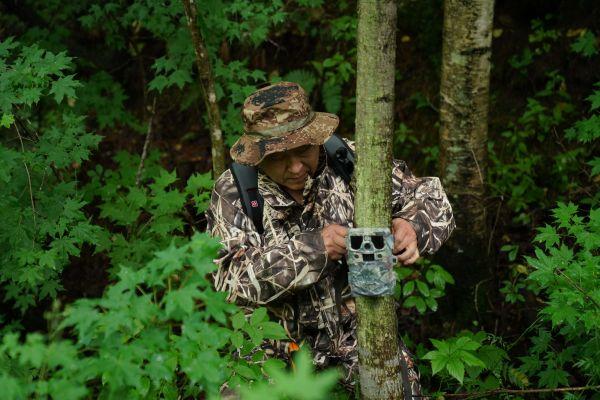 7月8日,野生东北虎保护者董红雨在迎春林业局有限公司施业区内查看架设在树上用于拍摄野生东北虎踪迹的远红外相机。新华社记者王松摄