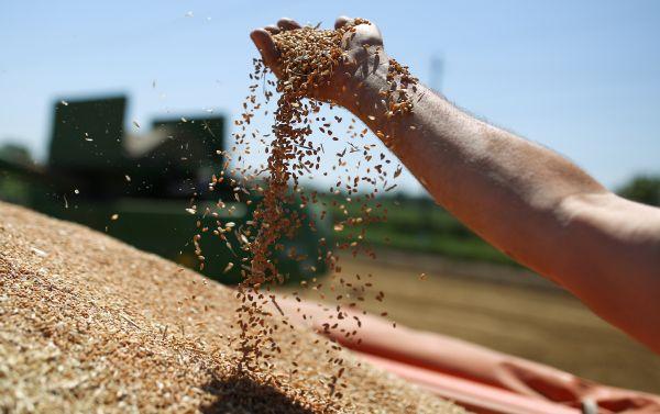 外媒:全球小麦超产供过于求 俄夺回最大出口国桂冠