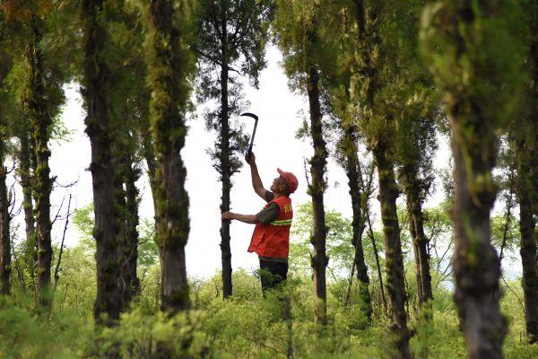 美媒报道:中国植树造林经验启迪世界